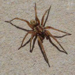 Уничтожение пауков в Абакане